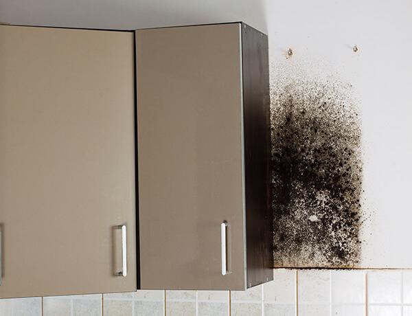 Condensación-cocina